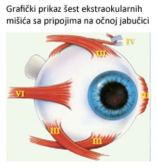 već na hrvatskom razrokost-strabizam-1